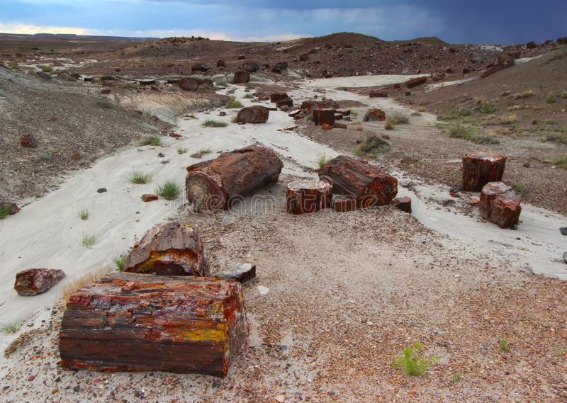 Petrified wood along the Crystal Forest hiking trail in Petrified Forest National Park, Arizona, USA. Petrified wood logs and paved Crystal Forest Trail in stock photo