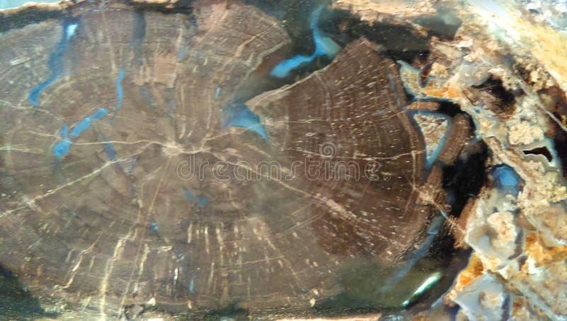 Petrified Wood Background royalty free stock image