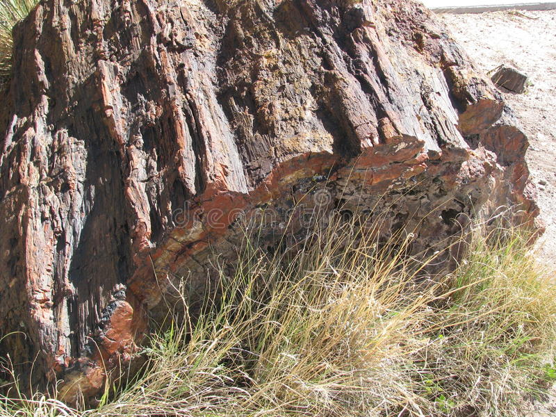 Petrified wood stock images