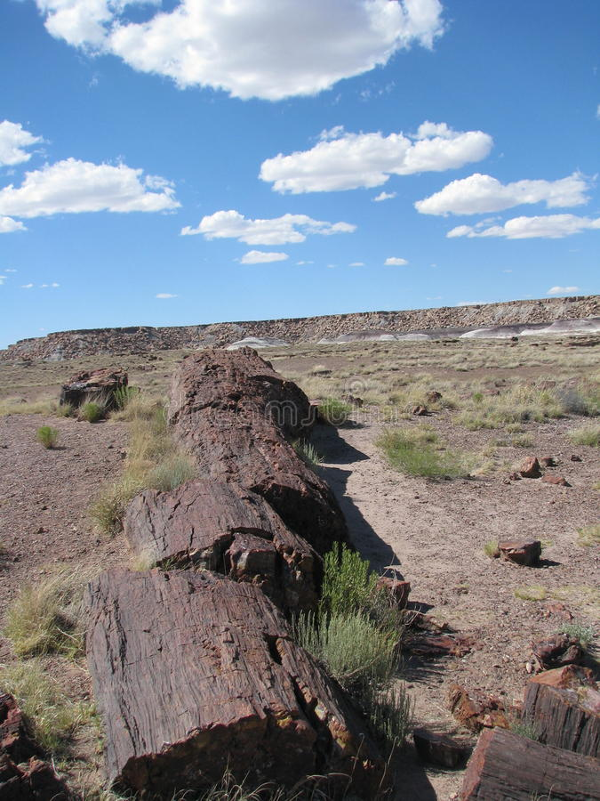 Petrified wood in desert stock photos