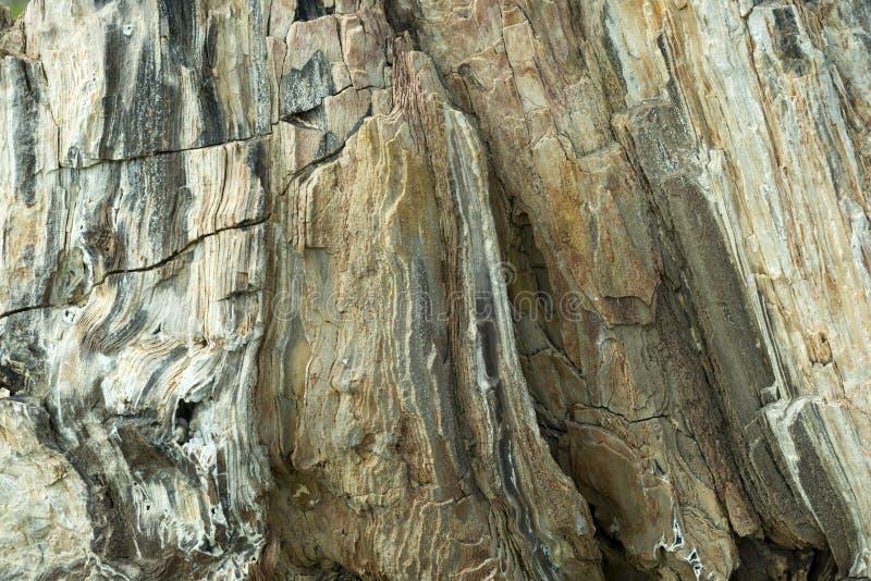 Petrified Wood Detail 02. A closeup image of petrified wood royalty free stock image