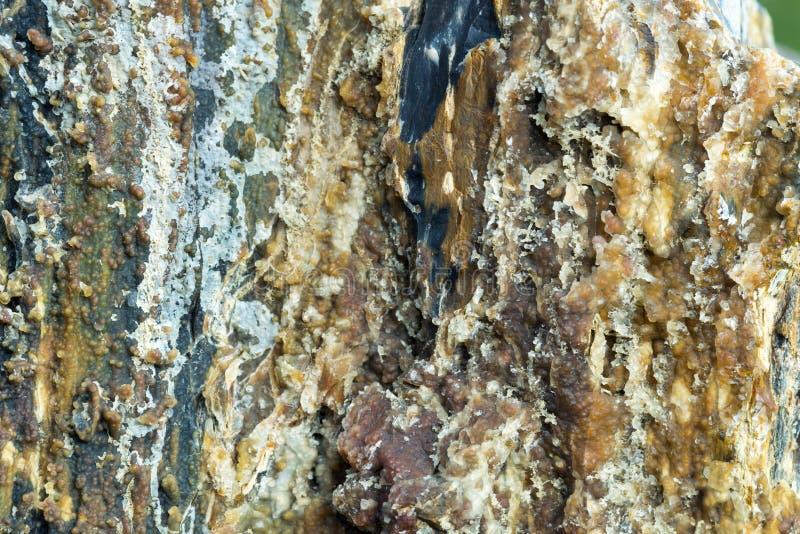 Petrified Wood Detail 04. A closeup image of petrified wood royalty free stock images