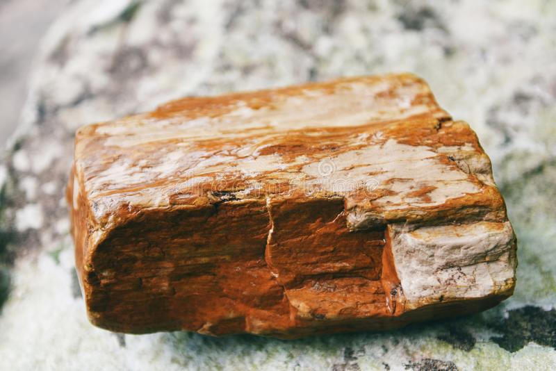 Petrified wood fossil - The old wood becomes stone by natural stock photo