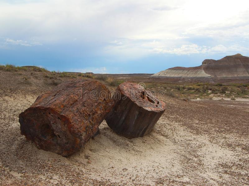 Petrified wood logs Petrified Forest National Park, Arizona, USA. Petrified wood logs scattered across eroded landscape, at paved Crystal Forest Trail in stock photo