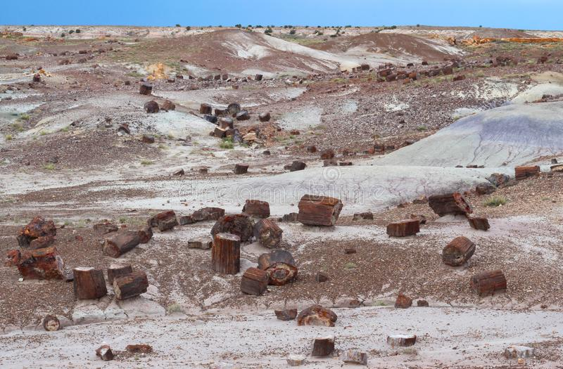 Petrified wood scatted across landscape, Petrified Forest National Park, Arizona, USA. Petrified wood logs and paved Crystal Forest Trail in Petrified Forest stock photo
