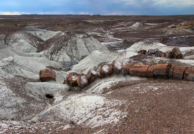 Petrified wood log broken across ground, Petrified Forest National Park, Arizona, US. Petrified wood logs scattered across eroded landscape, at paved Crystal stock photography