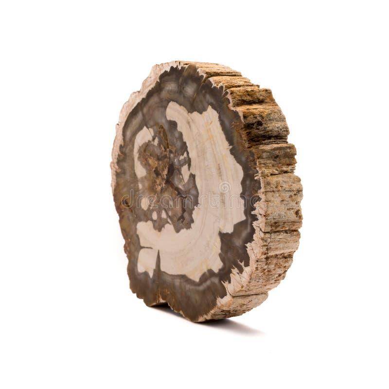 Petrified wood Madagascar isolated on white background royalty free stock photos