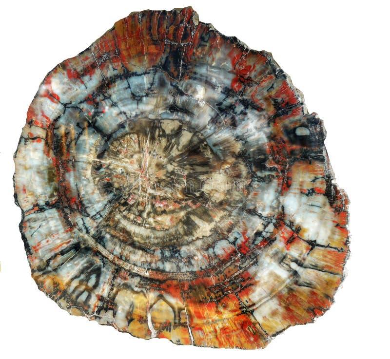Petrified Wood Background stock photos