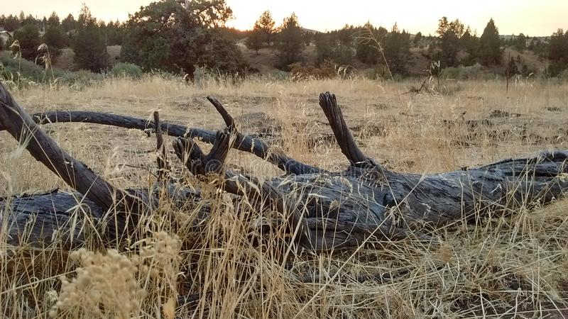 Petrified wood sculpture. Natures designs prairie art royalty free stock photos
