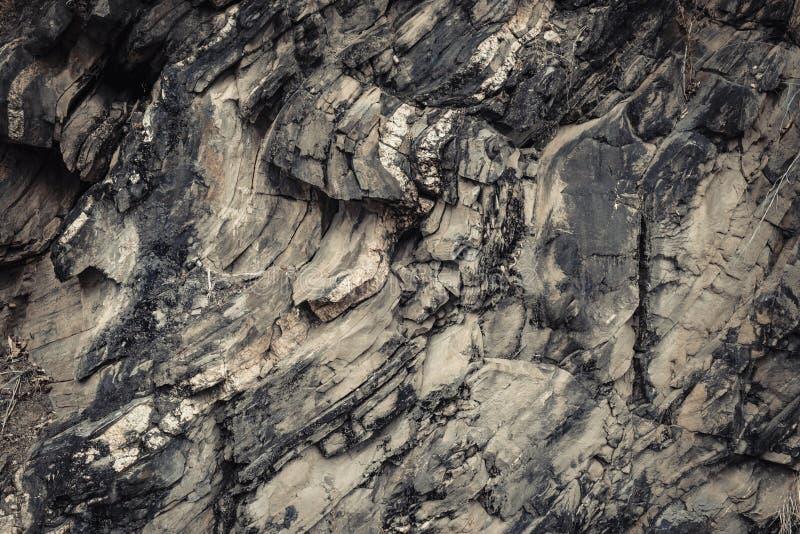 The Petrified Wood Texture Background, stock photo