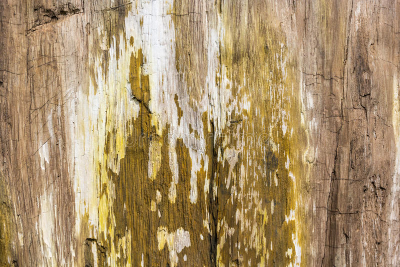 Petrified Wood Texture Background royalty free stock photos