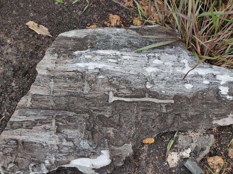 Petrified wood, tree fossil, stone stock photo