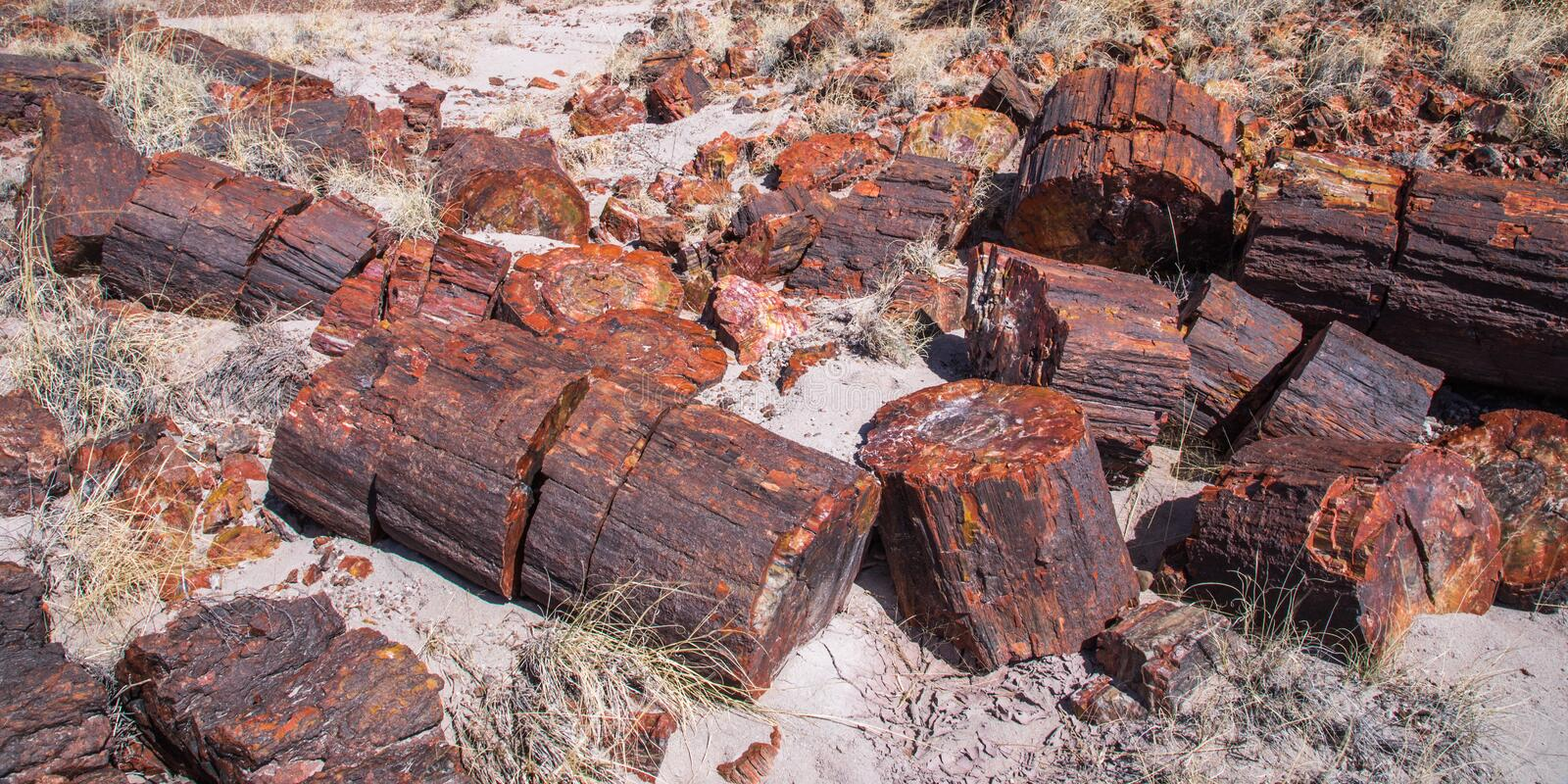 Petrified Wood royalty free stock image