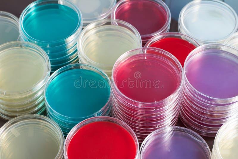 Petrischalen in werkbank van laboratorium worden gestapeld dat royalty-vrije stock afbeelding