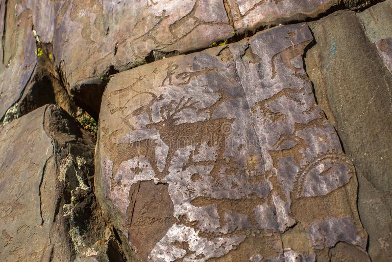 Petroglifi dell'Altai Pitture antiche della roccia nelle montagne di Altai immagine stock