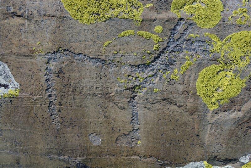 Petroglyph Altai arkivbild