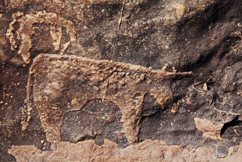 Petroglyphe in Marokko stockbilder