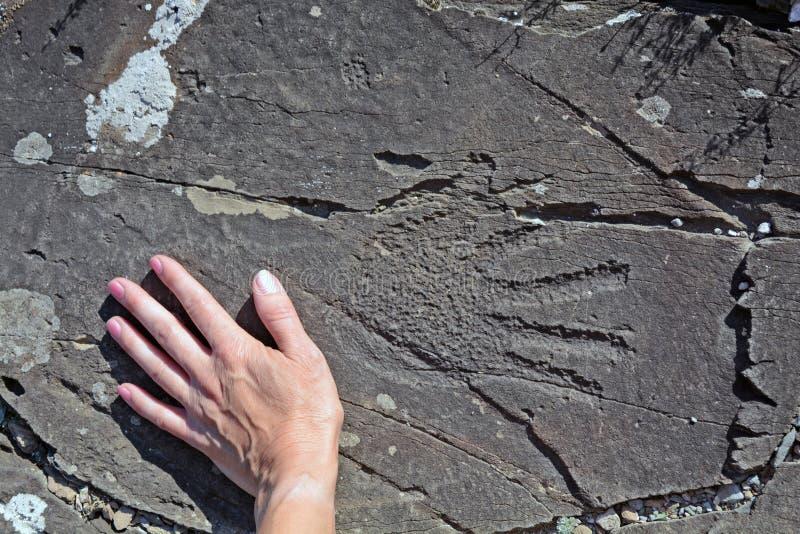 Petroglyphhand Altai royaltyfri fotografi
