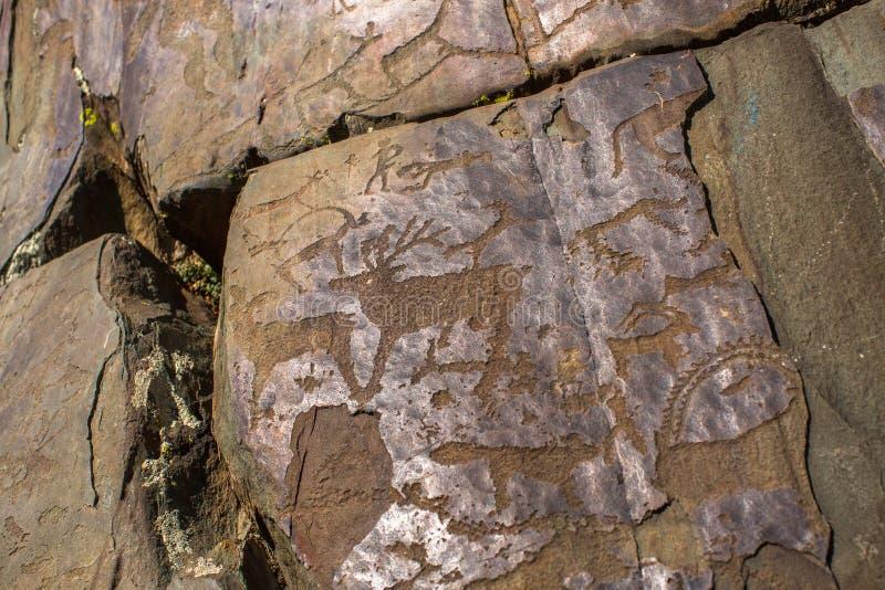 Petroglyphs de Altay Pinturas antigas da rocha nas montanhas de Altai imagem de stock