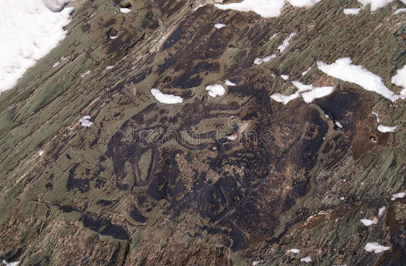 Petroglyphs dos povos antigos do lobo nas rochas no banco do rio Tom em Sibéria ocidental fotografia de stock royalty free