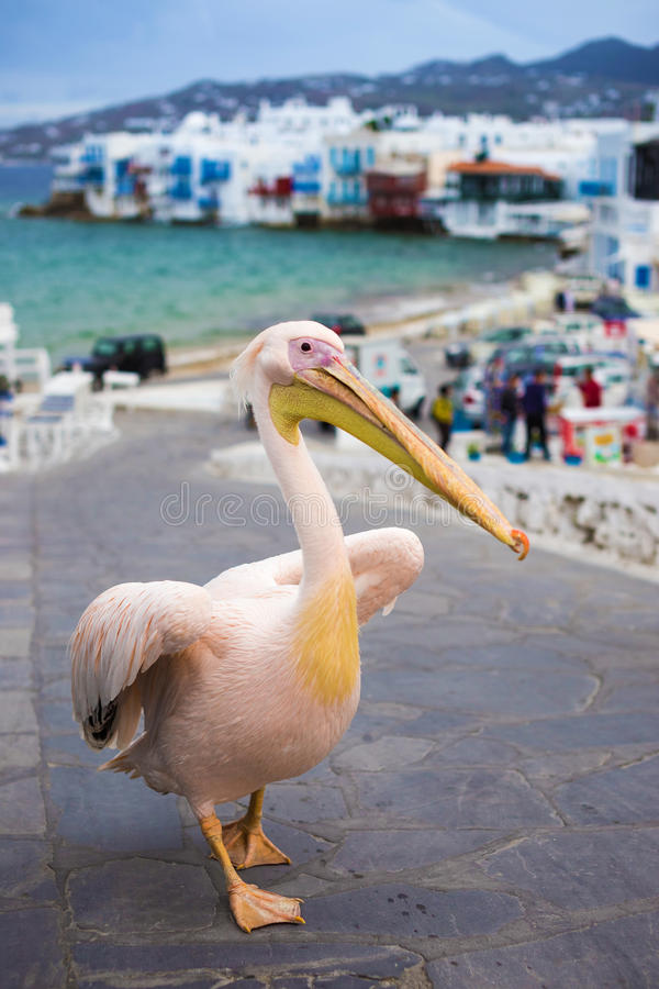 Petros the Pelican of Mykonos with Little Venice, Greece. Petros the Pelican of Mykonos with Little Venice royalty free stock image