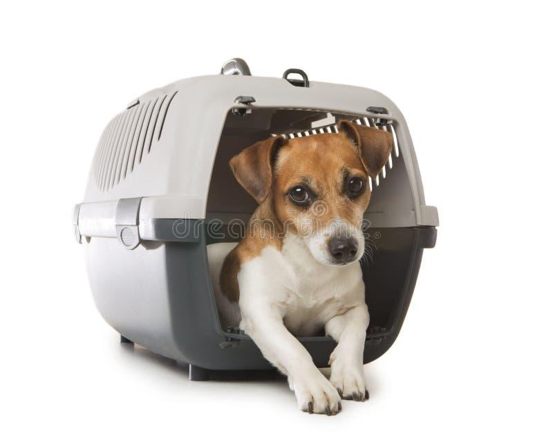 Pets транспорт стоковое изображение rf