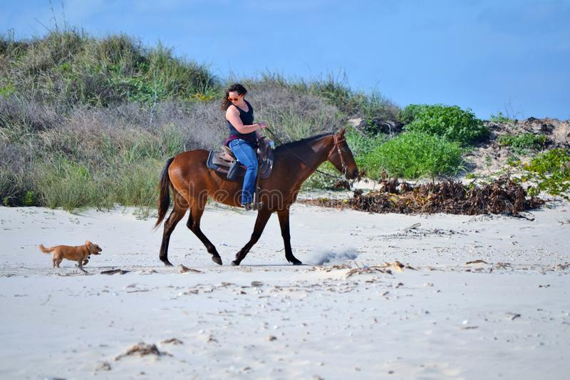 Pets on the beach. Woman rides horse on the beach, her little dog runs to keep ups royalty free stock images