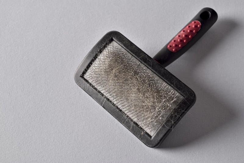 Download Pets brush stock photo. Image of fuzz, hairbrush, iron - 63090016