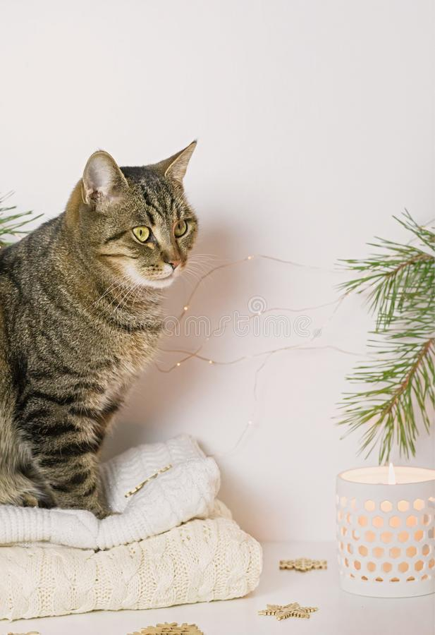 Pets, Christmas and cosiness concept - a tabby cat sitting on a warm sweater in a Christmas atmosphere. Close up stock images