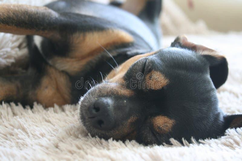 Pets dog friend sleep background stock image
