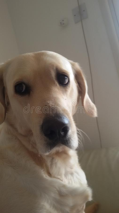 Pets stock photography
