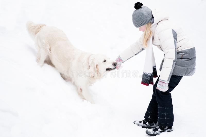 Pets in nature - a beautiful golden retriever plays with the owner with a stick in a winter snow-covered forest stock photo