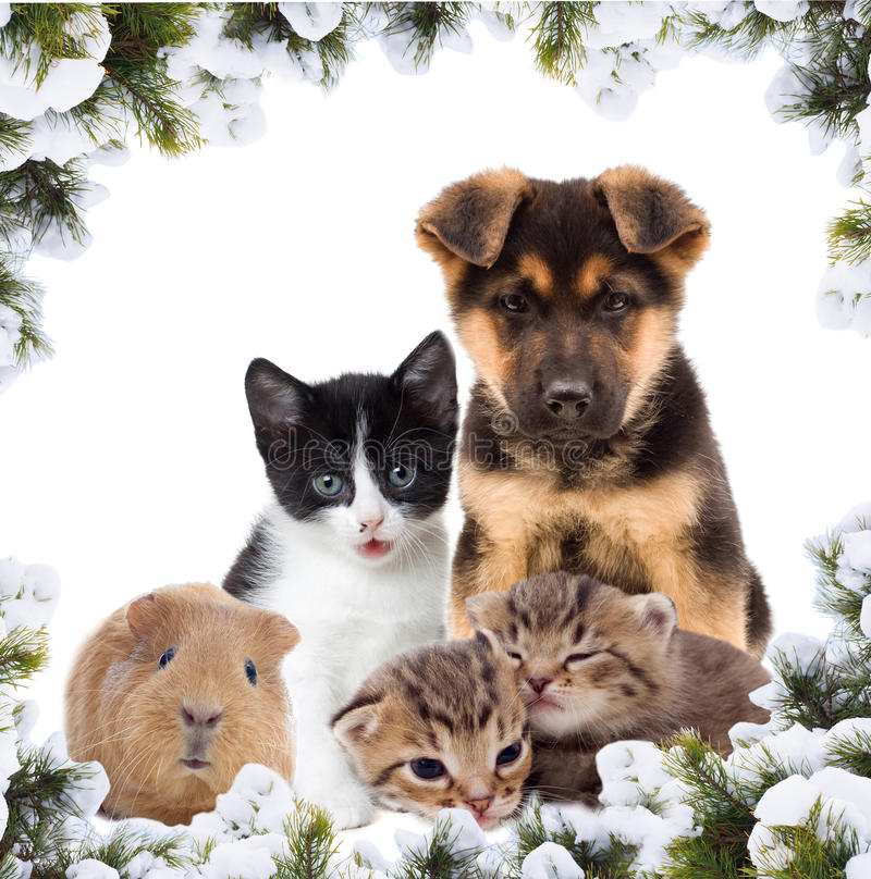 Pets and New Year royalty free stock photos