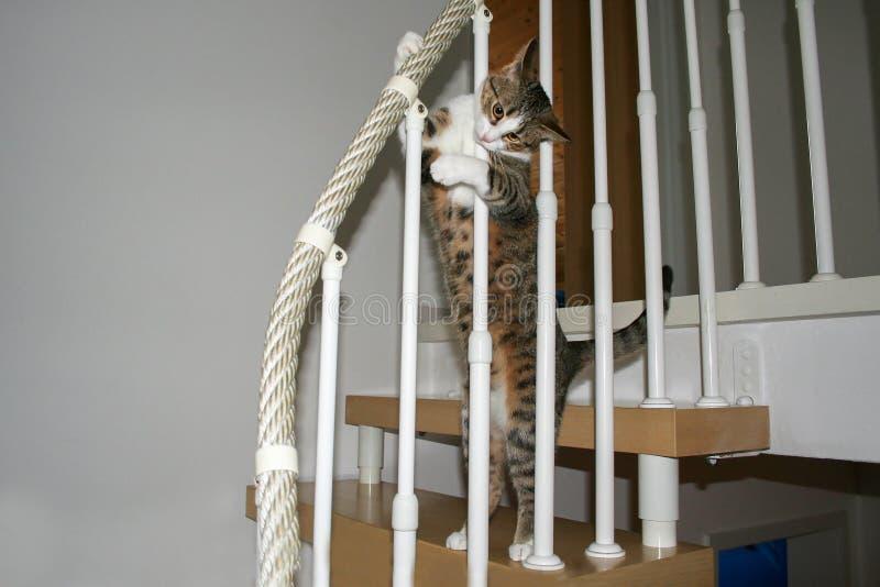 Portrait of a beautiful purebred housecat. Pets / Portrait of a beautiful purebred housecat royalty free stock image