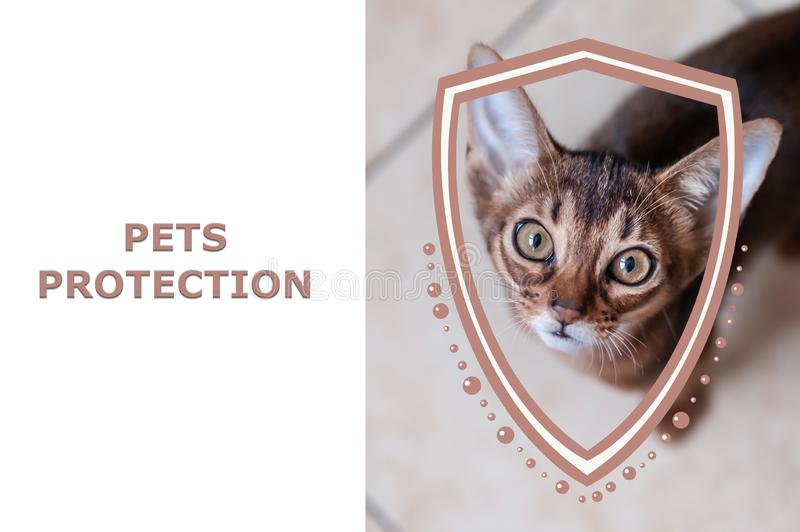 Pets protection concept. Portrait of a kitten and shield illustration. stock illustration