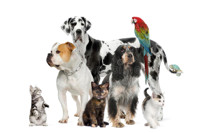 Download Pets Standing In Front Of White Background Stock Image - Image: 11785233