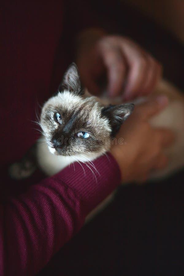 Petting o gato imagem de stock