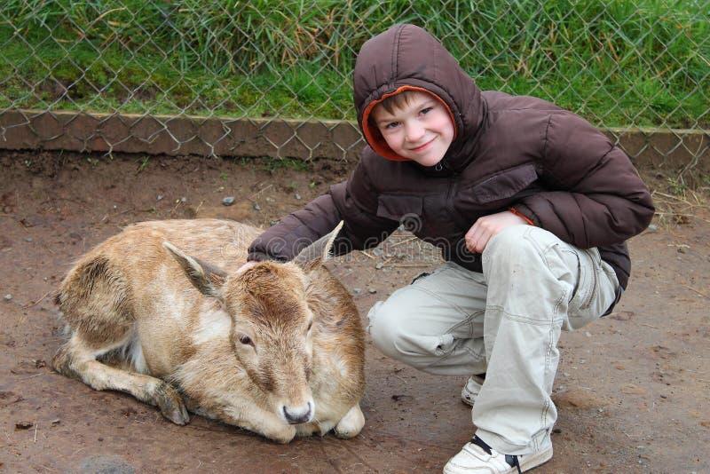 Petting Zoo stockfotografie