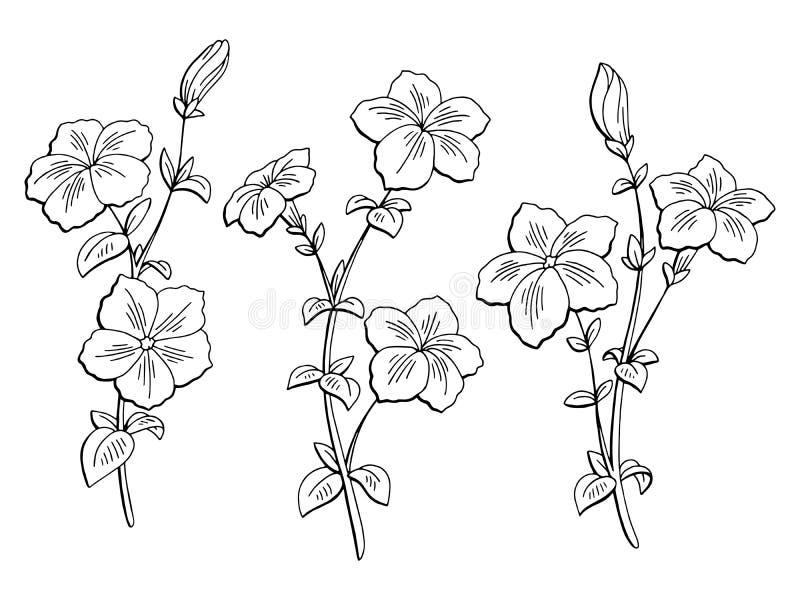Petunia kwiatu graficzny czarny biel odizolowywał nakreślenie ustalonego ilustracyjnego wektor ilustracja wektor