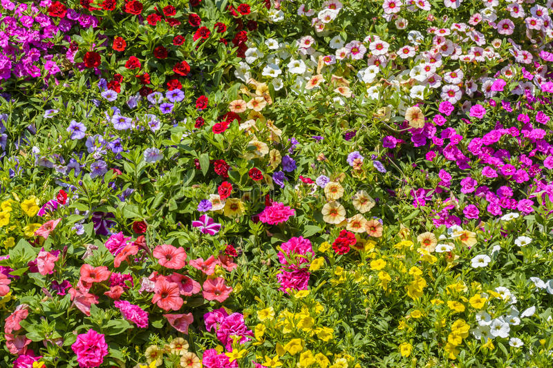 Colourful flowers background stock images