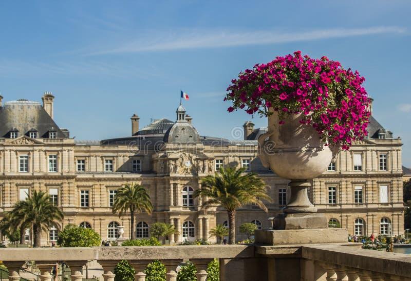 Petunie rosa-intenso in urna di pietra in Jardin de Lussemburgo, Parigi, Francia fotografia stock libera da diritti
