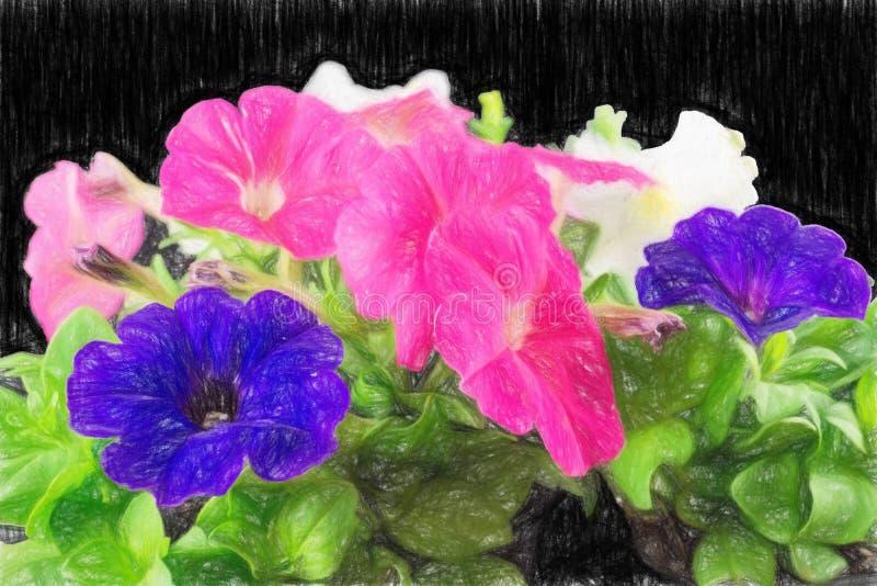 Petunien in farbigem Bleistift lizenzfreies stockbild