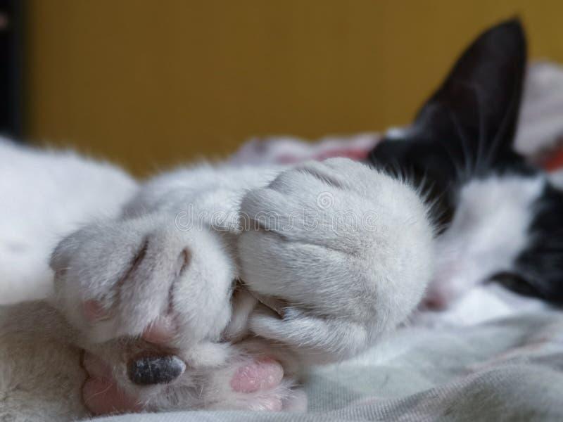 Peu chat noir et blanc prêt pour le petit somme photographie stock
