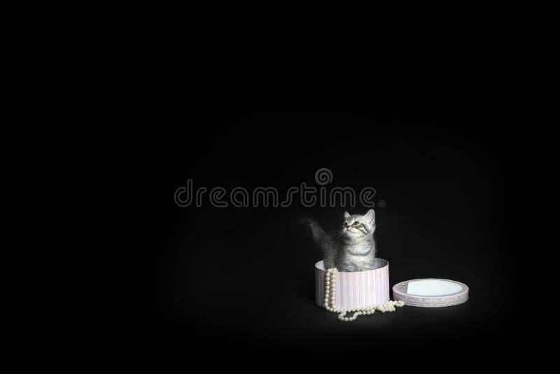 Peu chaton dans un boîte-cadeau sur un fond noir photographie stock