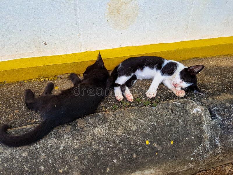 Peu chatons dormant sur la route photo libre de droits