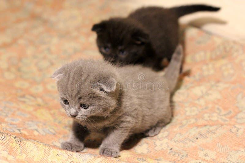 Peu chats sur le divan images libres de droits
