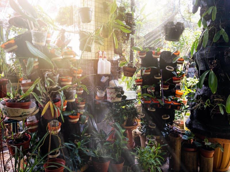 Peu coin sur la plantation de crèche d'orchidée avec le rayon du soleil image stock