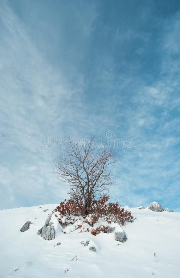 Peu d'arbre image stock