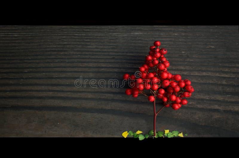 Peu d'arbre rouge images libres de droits