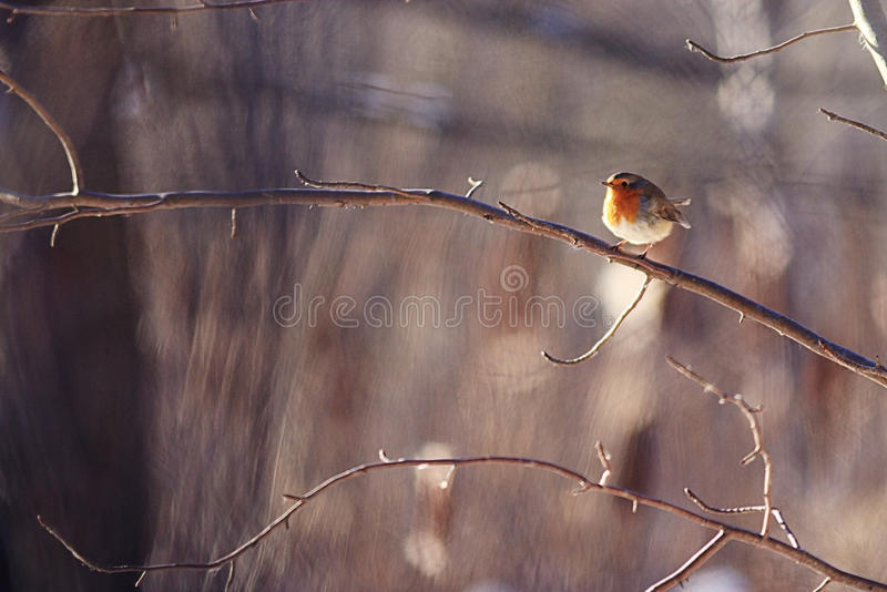 Peu d'oiseau de ressort photo stock